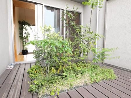 現代の「壷(つぼ)庭」