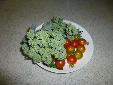 y-140724野菜(1)P1010362