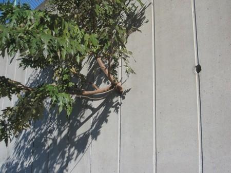 ど根性な木2