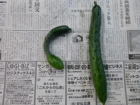 y-150702初収穫(1)