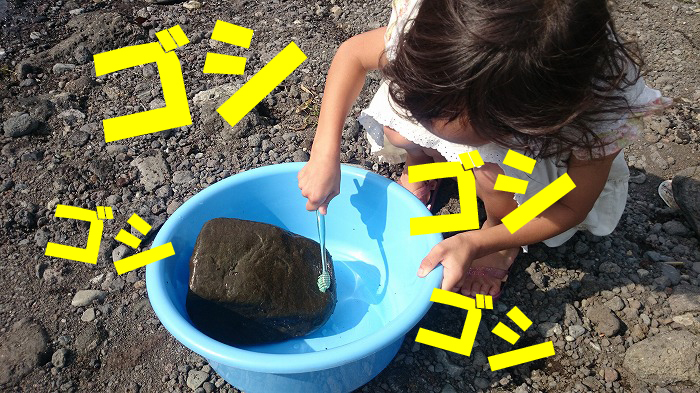 富士市の珪藻