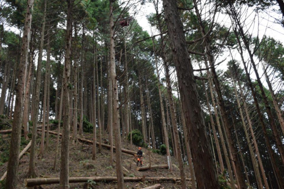伐採ツアー その2