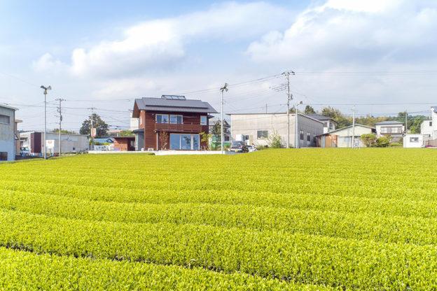 新茶の緑と茶色の木の外壁のコントラストが美しい。