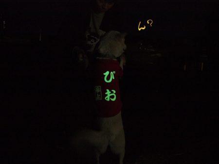 暗い夜道の犬のお散歩に光る服