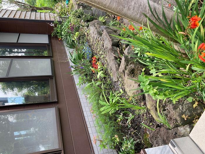 庭を素敵にしたい!5