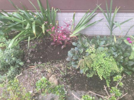 庭を素敵にしたい!6